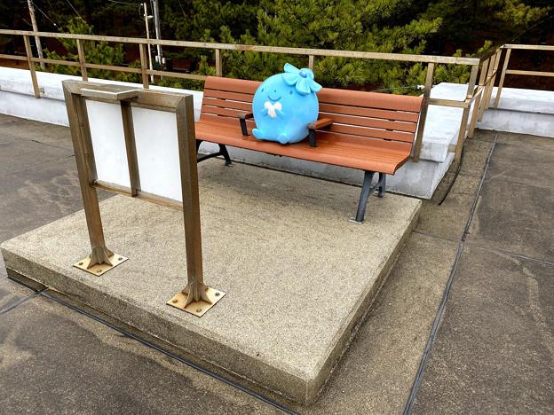 ベンチで休むココロちゃん