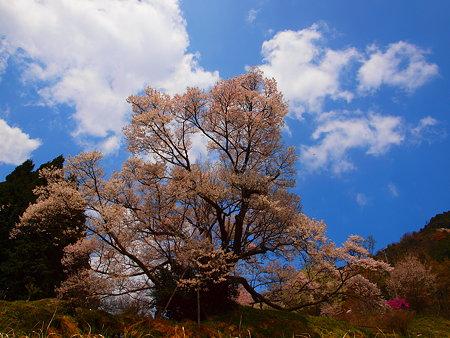 002_仏隆寺(千年桜)