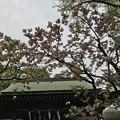 写真: 七社神社