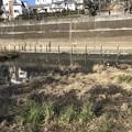 写真: 音無もみじ緑地