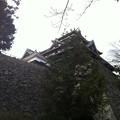 写真: 松江城
