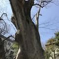 Photos: 青渭神社