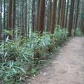 Photos: 吉野山