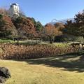 Photos: 小石川後楽園001