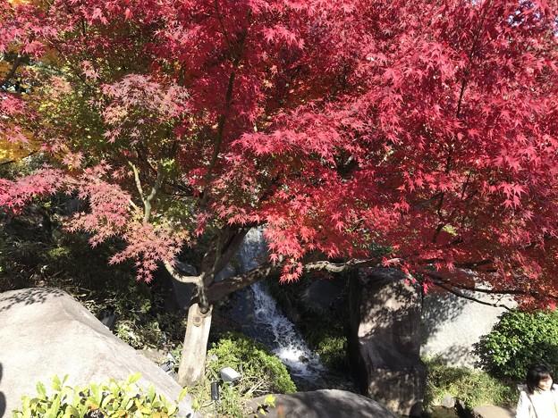 目白庭園2