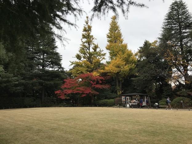 旧古河庭園 001
