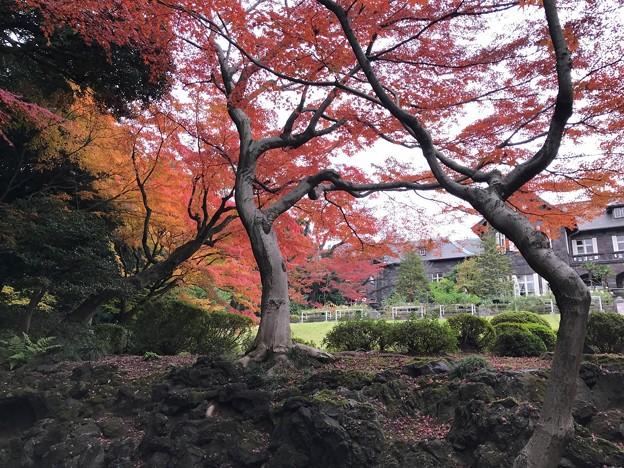 旧古河庭園 005