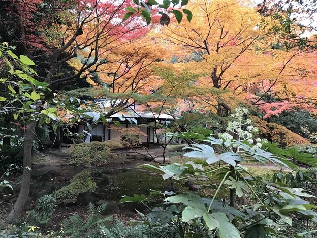 旧古河庭園 012