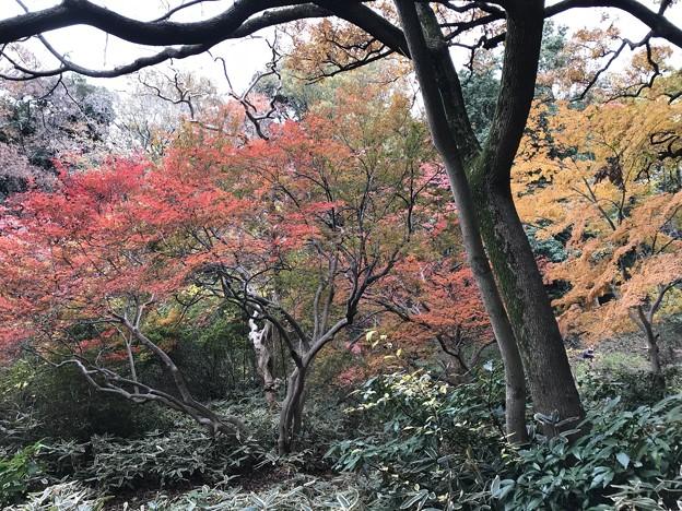 Photos: 六義園 008