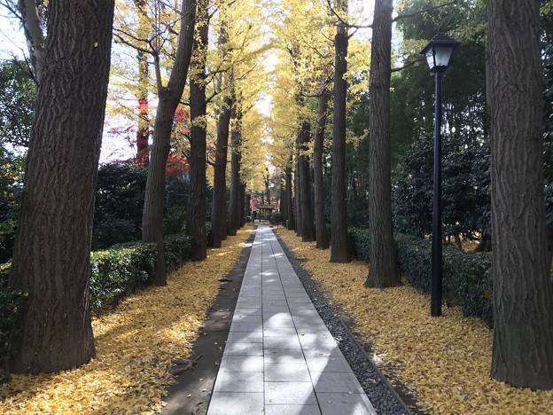 大田黒公園1