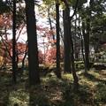大田黒公園2