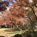大田黒公園4