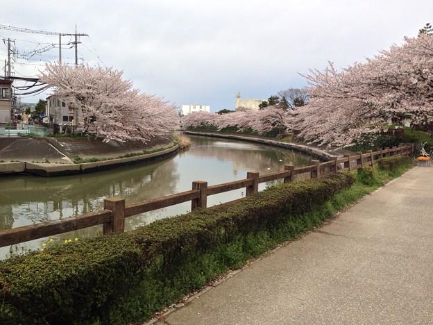 草加松原遊歩道3