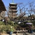 上野東照宮 15