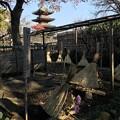 上野東照宮 17