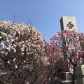 Photos: 香取神社