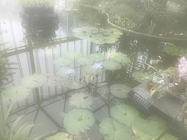 新宿御苑14