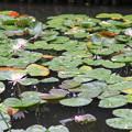 Photos: 赤塚植物園