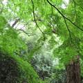 Photos: 名主の滝公園