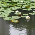 Photos: 小石川後楽園
