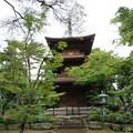 Photos: 豪徳寺