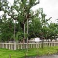 Photos: 西本願寺