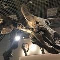 Photos: 国立科学博物館