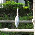 Photos: 亀戸天神社