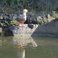 Photos: 日比谷公園