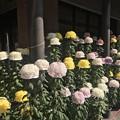 Photos: 高岩寺