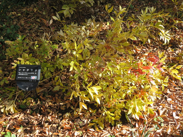 赤塚植物園