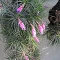 Photos: 小石川植物園