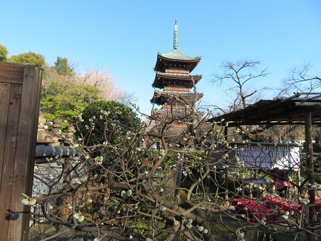 Photos: 上野東照宮