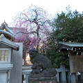Photos: 北野神社