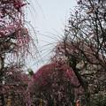 Photos: 小村井香取神社