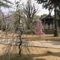 Photos: 寛永寺
