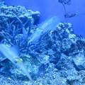 Photos: サンシャイン水族館