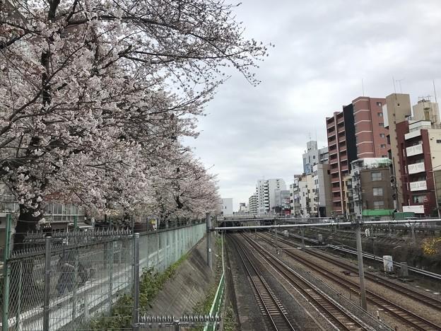 巣鴨桜並木通り