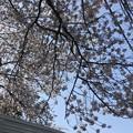 Photos: 七社神社