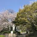 Photos: 飛鳥山公園