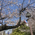 Photos: 飛鳥山公園_9254