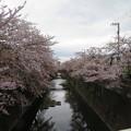 Photos: 石神井川