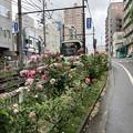 Photos: 都電荒川線