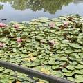 Photos: 荒川自然公園