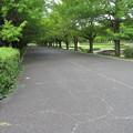 Photos: 国営昭和記念公園