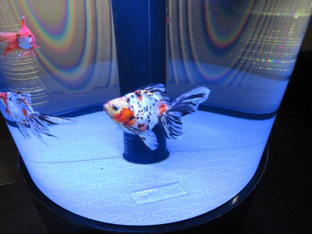 Photos: すみだ水族館