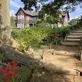 Photos: 旧古河庭園