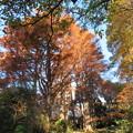 新宿御苑47