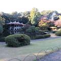 新宿御苑39
