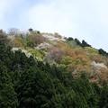 写真: 29 GW 山形 酒田 風景 3